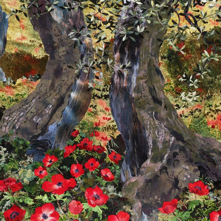 Red Anemones in Olive Grove